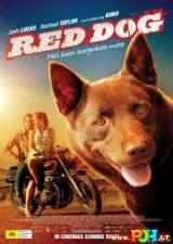 Raudonasis šuo