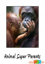 Ypatingi gyvūnų tėvai (2015)