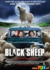Avys žudikės
